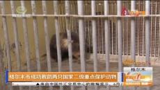 格尔木市成功救助两只国家二级重点保护动物