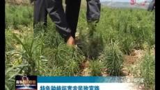 特色種植拓寬農民致富路