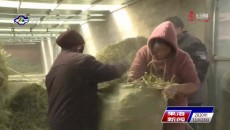 玛多:做好越冬物资储备 保障牧民群众财产安全