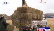 果洛:多措并举提升畜牧业抗灾能力