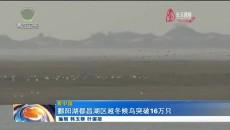 鄱阳湖都昌湖区越冬候鸟突破16万只