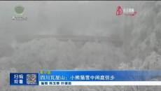 四川瓦屋山:小熊猫雪中闲庭信步
