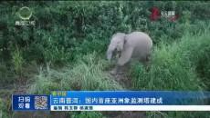 云南普洱:美高梅电玩城首座亚洲象监测塔建成