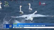 河南:黄河生态廊道助力打造区域生态格局
