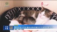 青岛农业大学在猫科动物克隆技术方面取得新突破