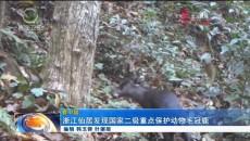 浙江仙居发现国家二级重点保护动物毛冠鹿