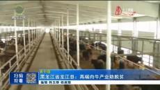 黑龙江省龙江县:高端肉牛产业助脱贫