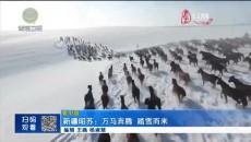 新疆昭苏:万马奔腾 踏雪而来