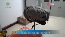 北京野鸭湖湿地自然保护区救助国家二级保护动物灰鹤