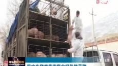 海东市生猪产能恢复向好价格平稳
