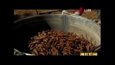 门源县掀起蕨麻采挖热潮