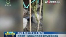 青海海南:雪豹袭击牧民羊圈 森林公安紧急救助