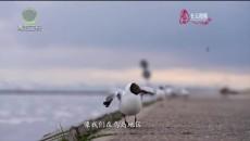 今日青海 20210513