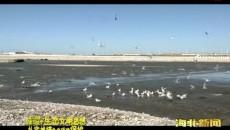 刚察:加强湿地保护修复 着力优化生态环境