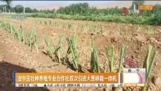 湟中茁壮种养殖专业合作社首次引进大葱移栽一体机