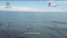 今日青海周末版 20210613