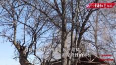 【打卡青海红色地标】大史家:黄河岸边永不褪色的旗帜
