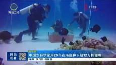 中国女科学家用20年在海底种下超12万株珊瑚