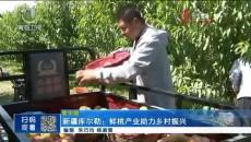 新疆库尔勒:鲜桃产业助力乡村振兴