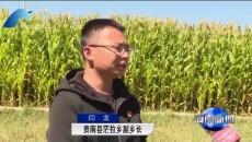 贵南:青贮玉米喜获丰收 助力主导产业发展