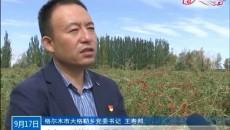 格尔木:十万亩枸杞迎来丰收季