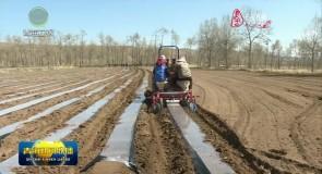 大通县实施全膜马铃薯栽培技术推广项目