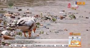 鸟类种群数量增多 湿地环境质量向好