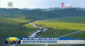 国宝羚牛首次在我省河南县现身