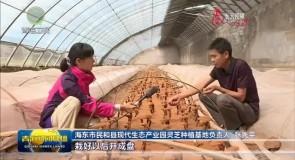 """民和:灵芝产业走出乡村振兴""""新路子"""""""