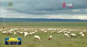 省委十三届十次全会精神在基层 泽库:多举措打造绿色有机农畜产品输出地