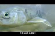 青海·我们的国家公园 第1集 草海(上)