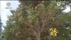 大美青海 20180611