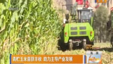 青贮玉米喜获丰收 助力主导产业发展