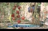 【新春走基层】贵德:加大蔬菜种植力度 带动群众增收致富