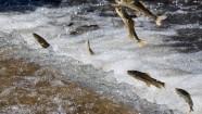 2018·第十一届青海湖裸鲤增殖放流暨观鱼放生节开幕式举行