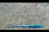 青海湖裸鲤资源蕴藏量达9.3万吨  比2002年增长了35.87倍