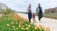 上山莊村:花海鋪出致富路