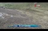 河南縣:野生巖羊成群覓食