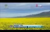 """数读青海经济""""三季报""""粮食总播种面积增加 畜牧业生产总体向好"""