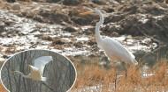 民和:良好水域环境 吸引鹭舞三川
