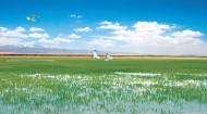 【牢记总书记嘱托 打造生态文明高地】 探索西部荒漠化地区生态治理路子