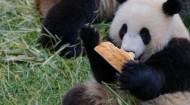 """我国正式设立首批五个国家公园 大熊猫国家公园""""转正"""""""