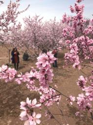 來一場高原上的賞花盛宴