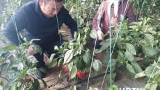 """""""集团作战"""" 湟中县每年培养近千名职业农民"""