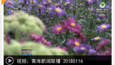 2018-01-16《青海新闻联播》