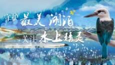 万博官网manbetx慢直播 | 守护最美湖泊 关注水上精灵