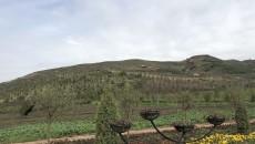 花海农庄 初步实现生态收益