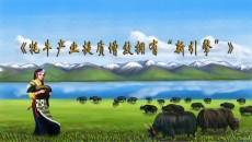 """万博官网manbetx牦牛产业提质增效 有了""""新引擎"""""""