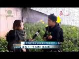 """【新春走基层】循化:黄河岸边好""""菜篮"""""""