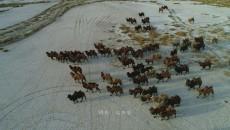 走起!德令哈情人湖畔享冬日暖阳   嗨翻!骑上骆驼领略大漠别样风情